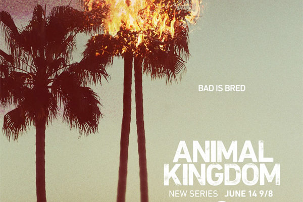 Serie TV Animal Kingdom immagine di copertina